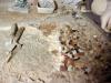 Terrazzo veneziano: inserimento mosaico 2